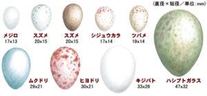 鳥の卵の種類