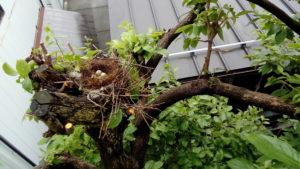 鳥の巣と卵