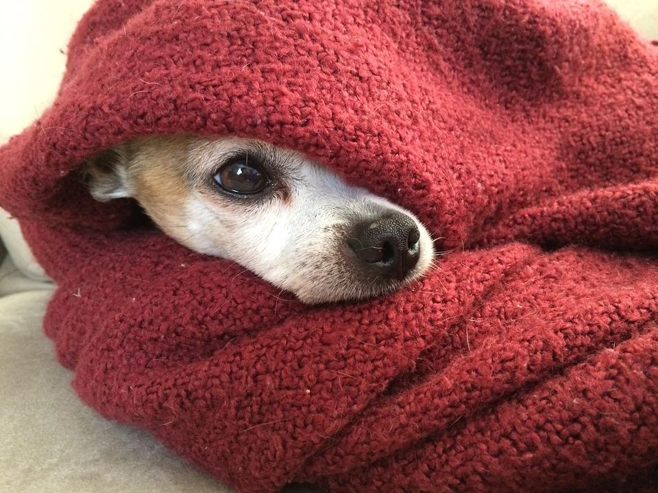 毛布が重いと不眠症改善するかも