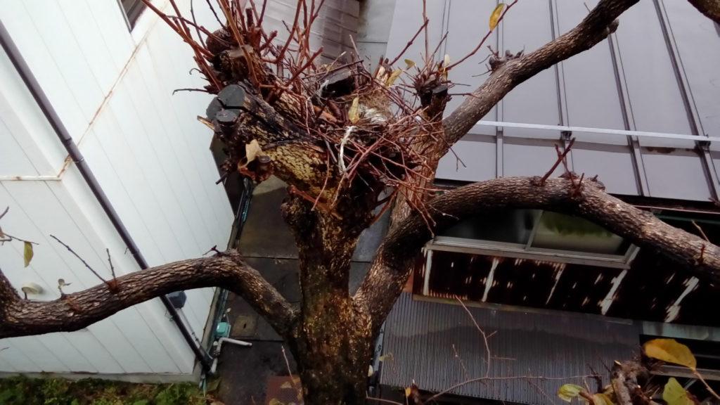 鳥の巣2020.11.10