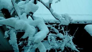 一晩で雪化粧
